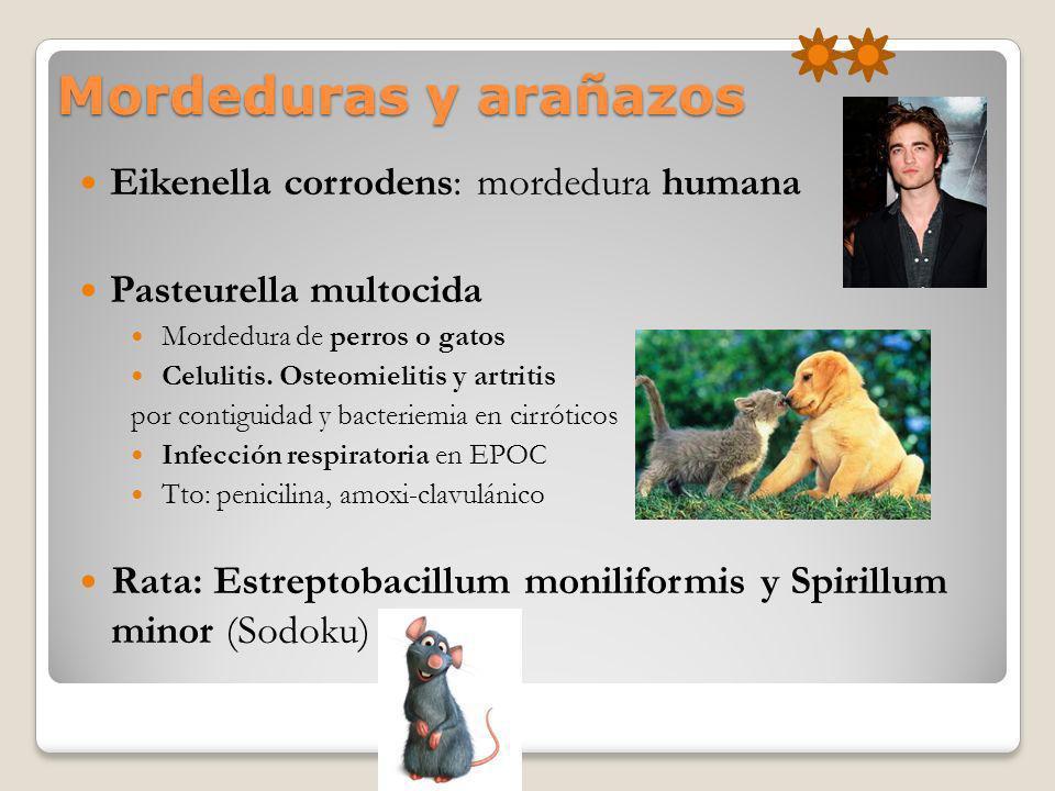 Mordeduras y arañazos Eikenella corrodens: mordedura humana Pasteurella multocida Mordedura de perros o gatos Celulitis. Osteomielitis y artritis por