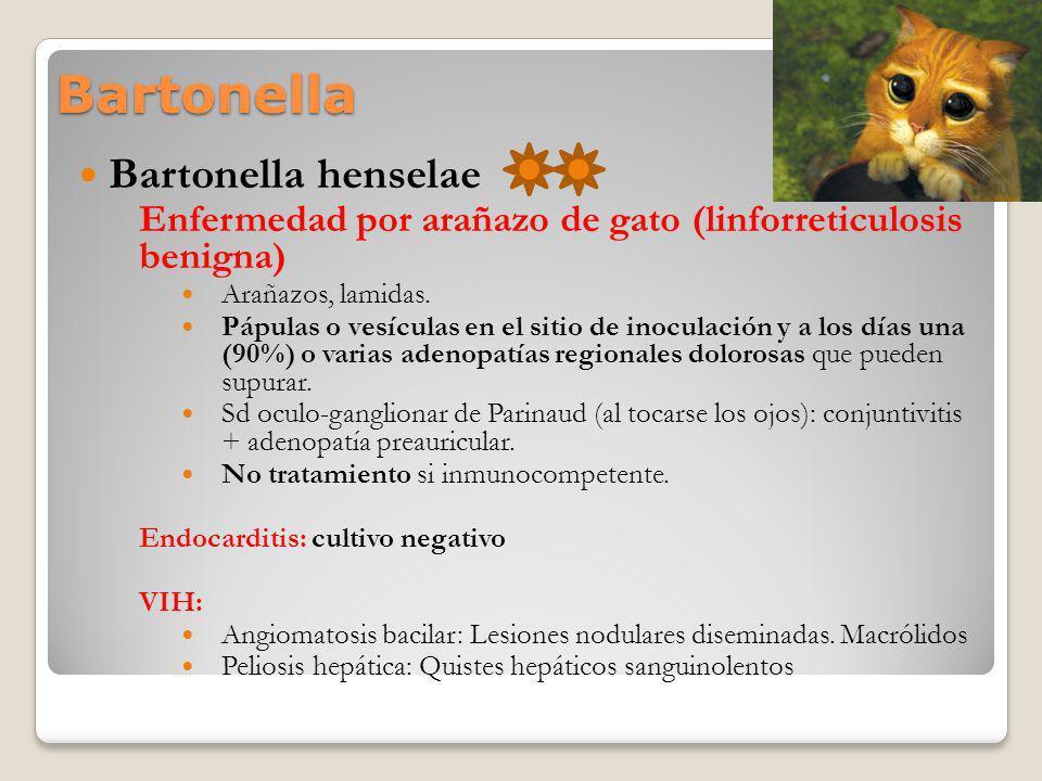Bartonella Bartonella henselae Enfermedad por arañazo de gato (linforreticulosis benigna) Arañazos, lamidas. Pápulas o vesículas en el sitio de inocul