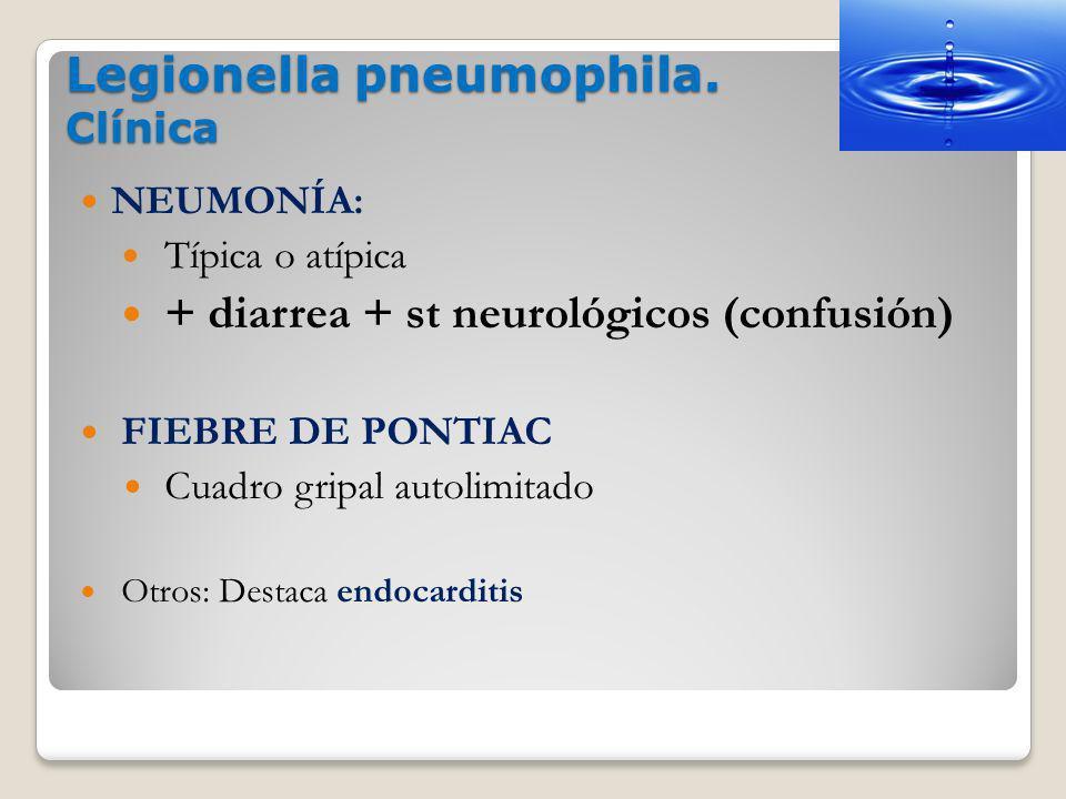 Legionella pneumophila. Clínica NEUMONÍA: Típica o atípica + diarrea + st neurológicos (confusión) FIEBRE DE PONTIAC Cuadro gripal autolimitado Otros: