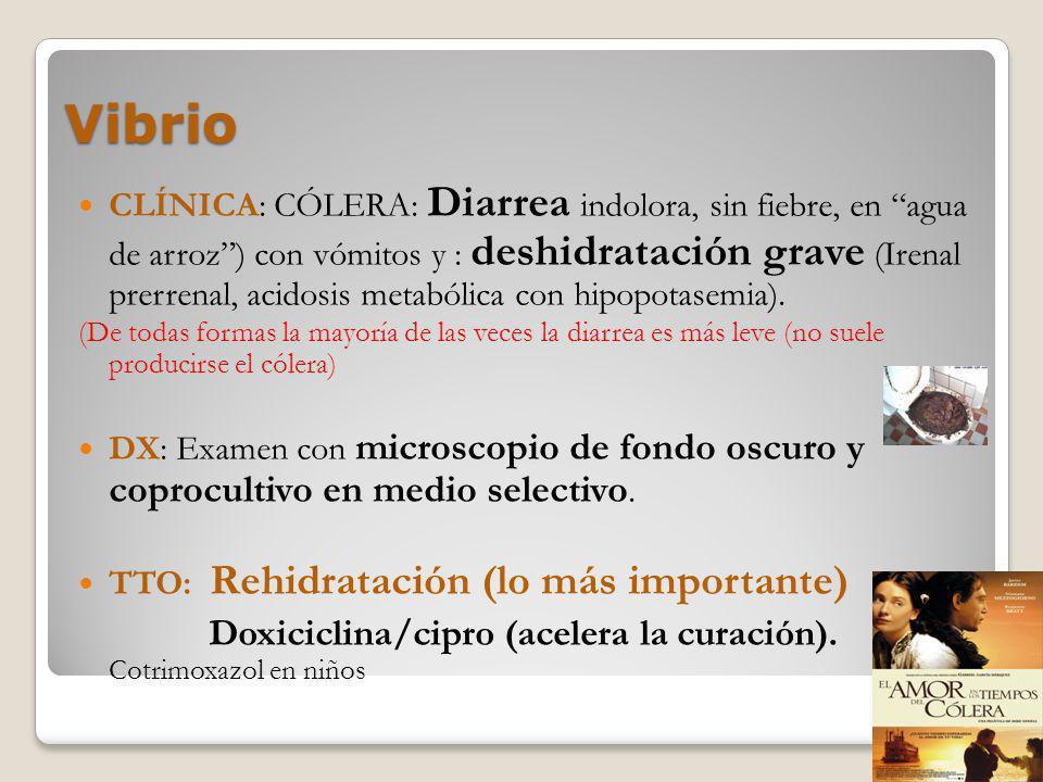 Vibrio CLÍNICA: CÓLERA: Diarrea indolora, sin fiebre, en agua de arroz) con vómitos y : deshidratación grave (Irenal prerrenal, acidosis metabólica co