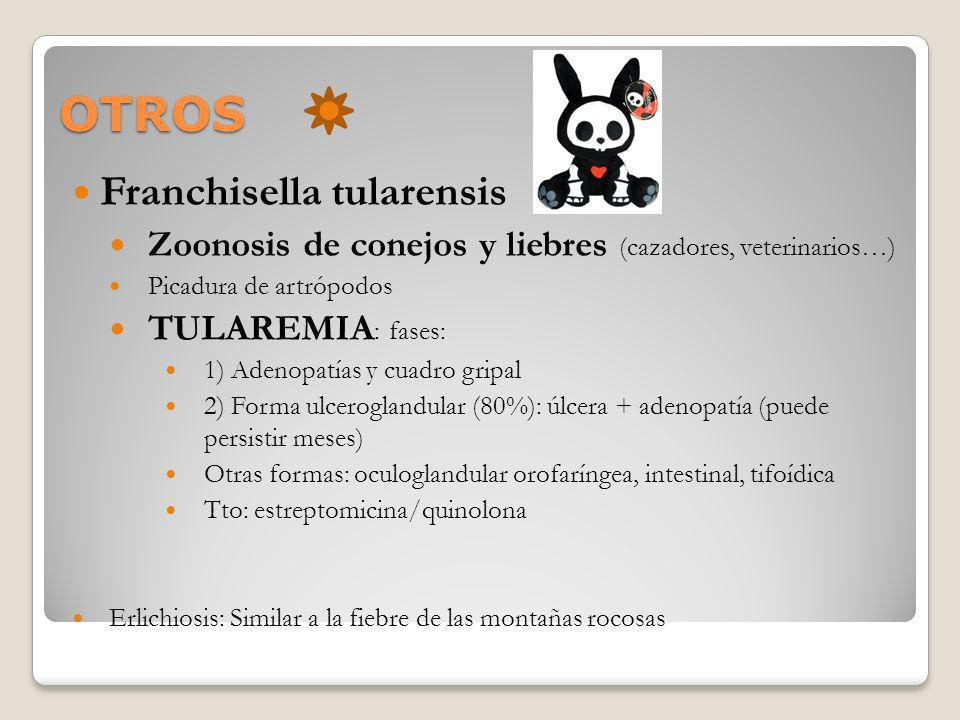OTROS Franchisella tularensis Zoonosis de conejos y liebres (cazadores, veterinarios…) Picadura de artrópodos TULAREMIA : fases: 1) Adenopatías y cuad