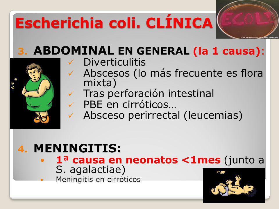 Mordeduras y arañazos Eikenella corrodens: mordedura humana Pasteurella multocida Mordedura de perros o gatos Celulitis.