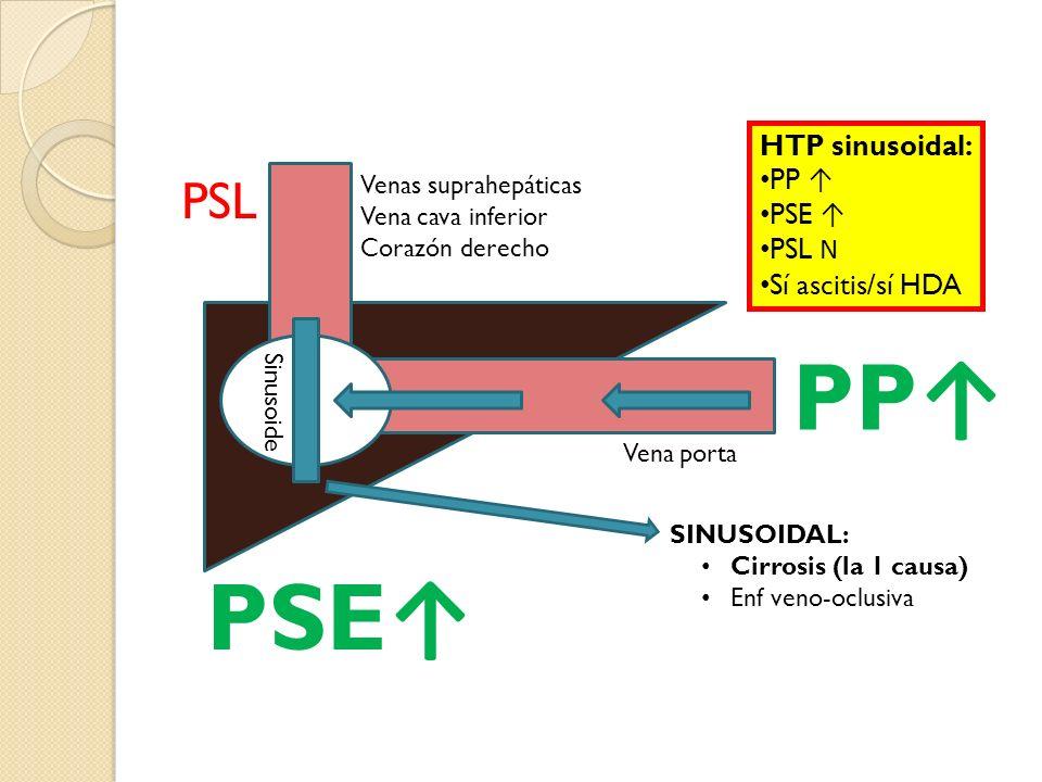 PP PSE PSL Vena porta Sinusoide Venas suprahepáticas Vena cava inferior Corazón derecho HTP sinusoidal: PP PSE PSL N Sí ascitis/sí HDA SINUSOIDAL: Cir