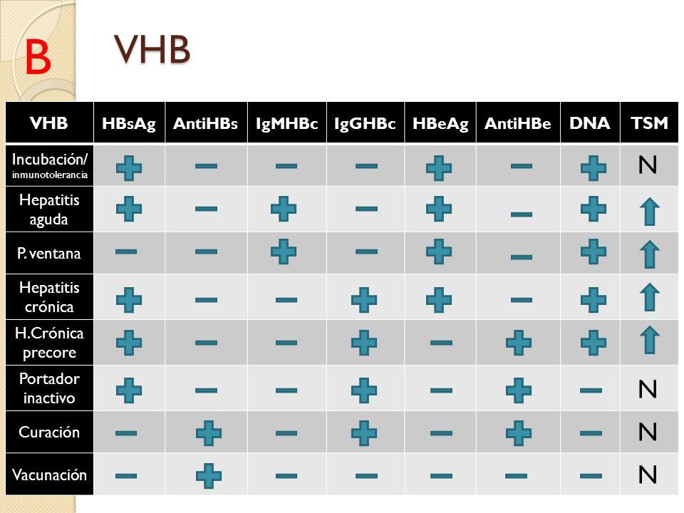 VHB VHB HBsAgAntiHBsIgMHBcIgGHBcHBeAgAntiHBe DNATSM Incubación/ inmunotolerancia Hepatitis aguda P. ventana Hepatitis crónica H.Crónica precore Portad