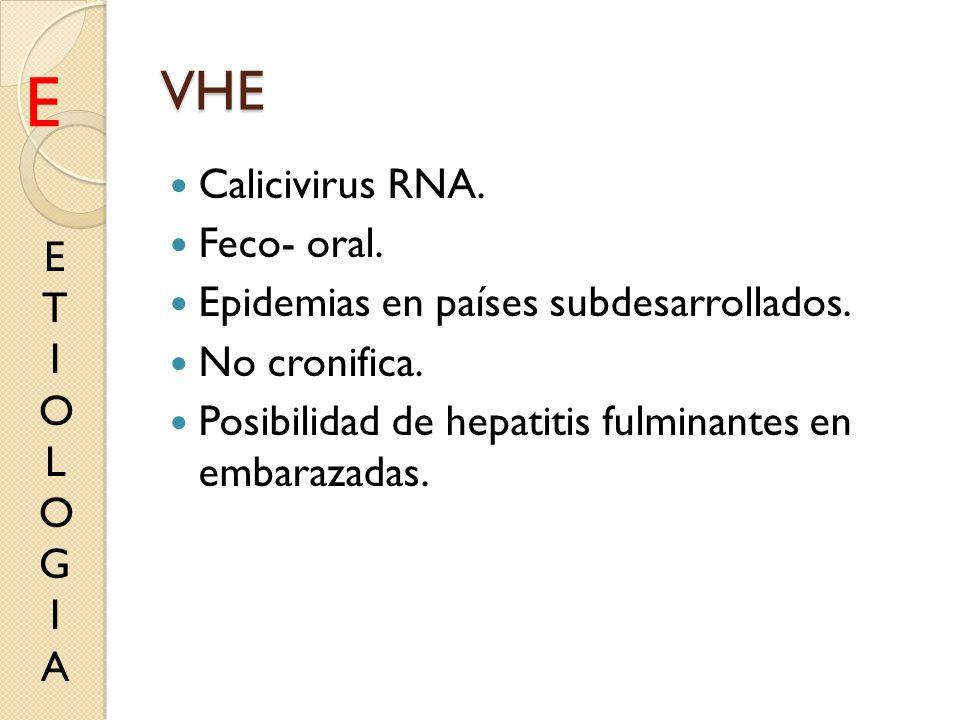 VHE Calicivirus RNA. Feco- oral. Epidemias en países subdesarrollados. No cronifica. Posibilidad de hepatitis fulminantes en embarazadas. ETIOLOGIAETI