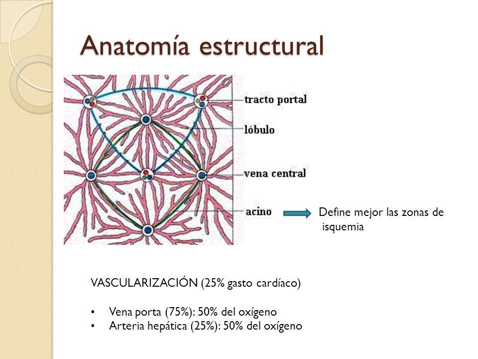 Anatomía estructural Define mejor las zonas de isquemia VASCULARIZACIÓN (25% gasto cardíaco) Vena porta (75%): 50% del oxígeno Arteria hepática (25%):