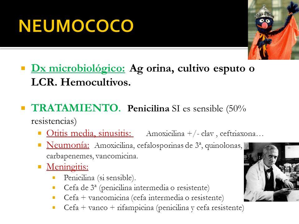 Dx microbiológico: Ag orina, cultivo esputo o LCR. Hemocultivos. TRATAMIENTO. Penicilina SI es sensible (50% resistencias) Otitis media, sinusitis: Am