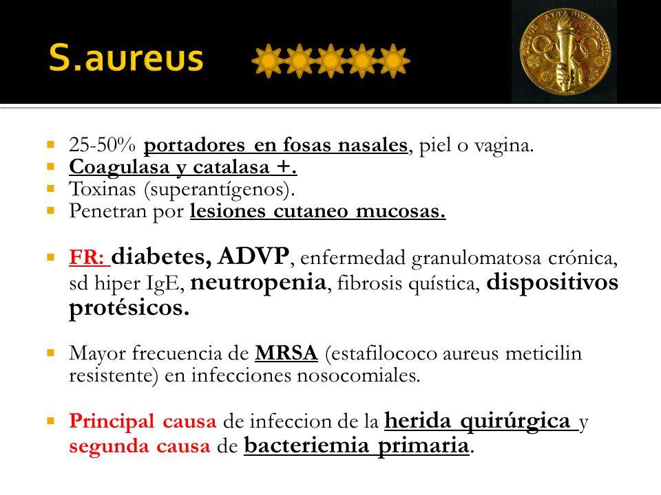 25-50% portadores en fosas nasales, piel o vagina. Coagulasa y catalasa +. Toxinas (superantígenos). Penetran por lesiones cutaneo mucosas. FR: diabet