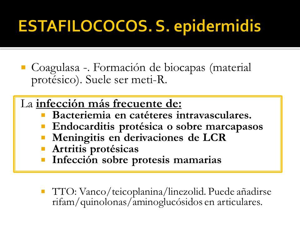 Coagulasa -. Formación de biocapas (material protésico). Suele ser meti-R. La infección más frecuente de: Bacteriemia en catéteres intravasculares. En