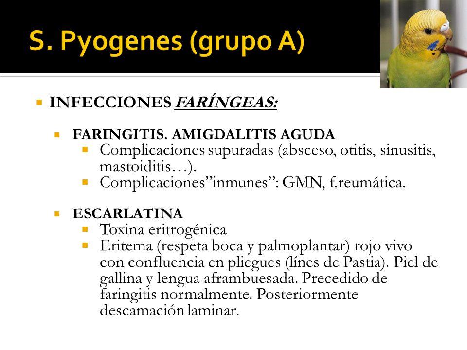 INFECCIONES FARÍNGEAS: FARINGITIS. AMIGDALITIS AGUDA Complicaciones supuradas (absceso, otitis, sinusitis, mastoiditis…). Complicacionesinmunes: GMN,