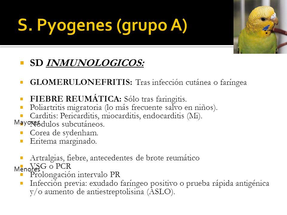 SD INMUNOLOGICOS: GLOMERULONEFRITIS: Tras infección cutánea o faríngea FIEBRE REUMÁTICA: Sólo tras faringitis. Poliartritis migratoria (lo más frecuen