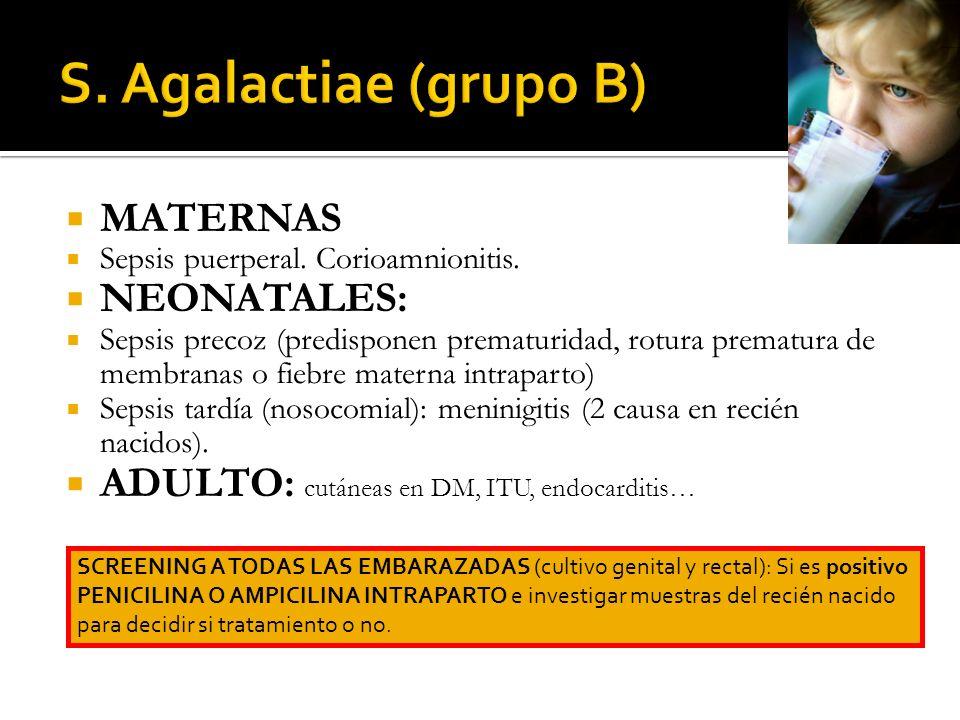 MATERNAS Sepsis puerperal. Corioamnionitis. NEONATALES: Sepsis precoz (predisponen prematuridad, rotura prematura de membranas o fiebre materna intrap