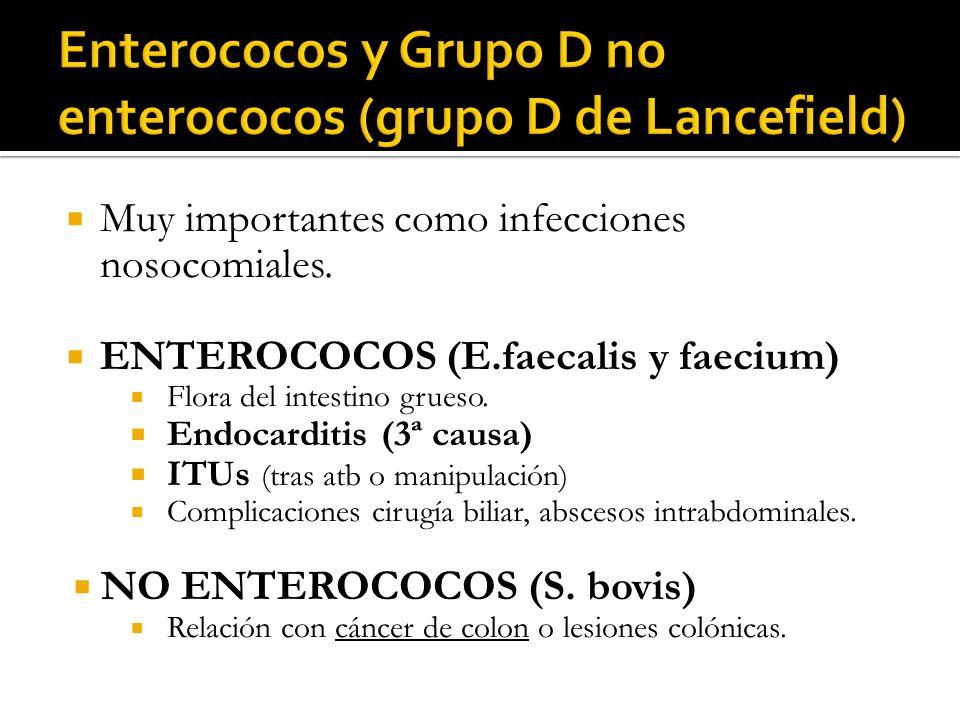 Muy importantes como infecciones nosocomiales. ENTEROCOCOS (E.faecalis y faecium) Flora del intestino grueso. Endocarditis (3ª causa) ITUs (tras atb o