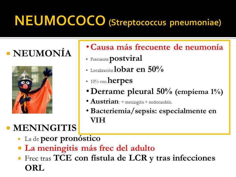 NEUMONÍA MENINGITIS La de peor pronóstico La meningitis más frec del adulto Frec tras TCE con fístula de LCR y tras infecciones ORL Causa más frecuent