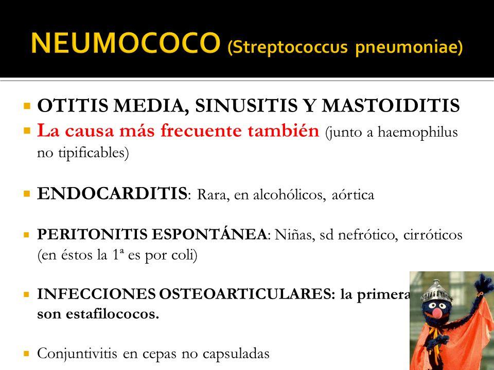 OTITIS MEDIA, SINUSITIS Y MASTOIDITIS La causa más frecuente también (junto a haemophilus no tipificables) ENDOCARDITIS : Rara, en alcohólicos, aórtic