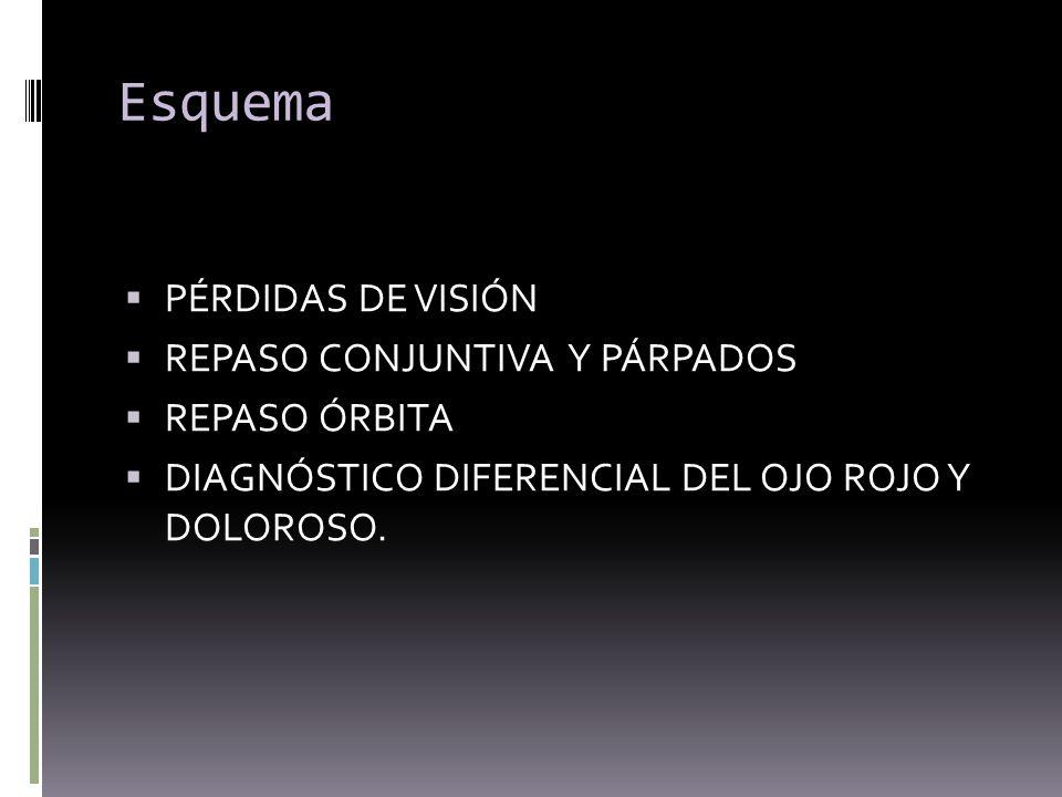 Esquema PÉRDIDAS DE VISIÓN REPASO CONJUNTIVA Y PÁRPADOS REPASO ÓRBITA DIAGNÓSTICO DIFERENCIAL DEL OJO ROJO Y DOLOROSO.