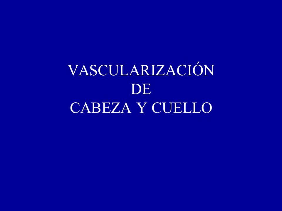 VASCULARIZACIÓN DE CABEZA Y CUELLO
