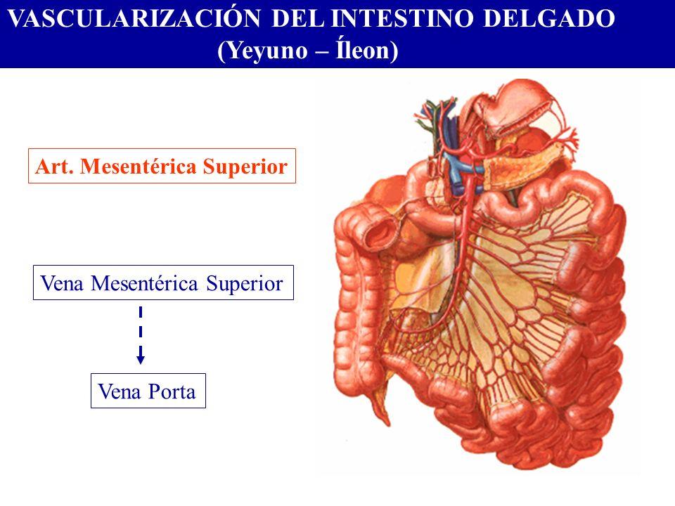 VASCULARIZACIÓN DEL INTESTINO DELGADO (Yeyuno – Íleon) Art. Mesentérica Superior Vena Mesentérica Superior Vena Porta