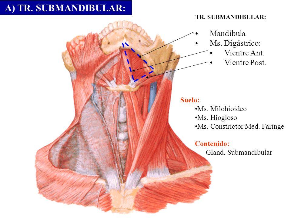 TR. SUBMANDIBULAR: Mandíbula Ms. Digástrico: Vientre Ant. Vientre Post. Suelo: Ms. Milohioideo Ms. Hiogloso Ms. Constrictor Med. Faringe Contenido: Gl