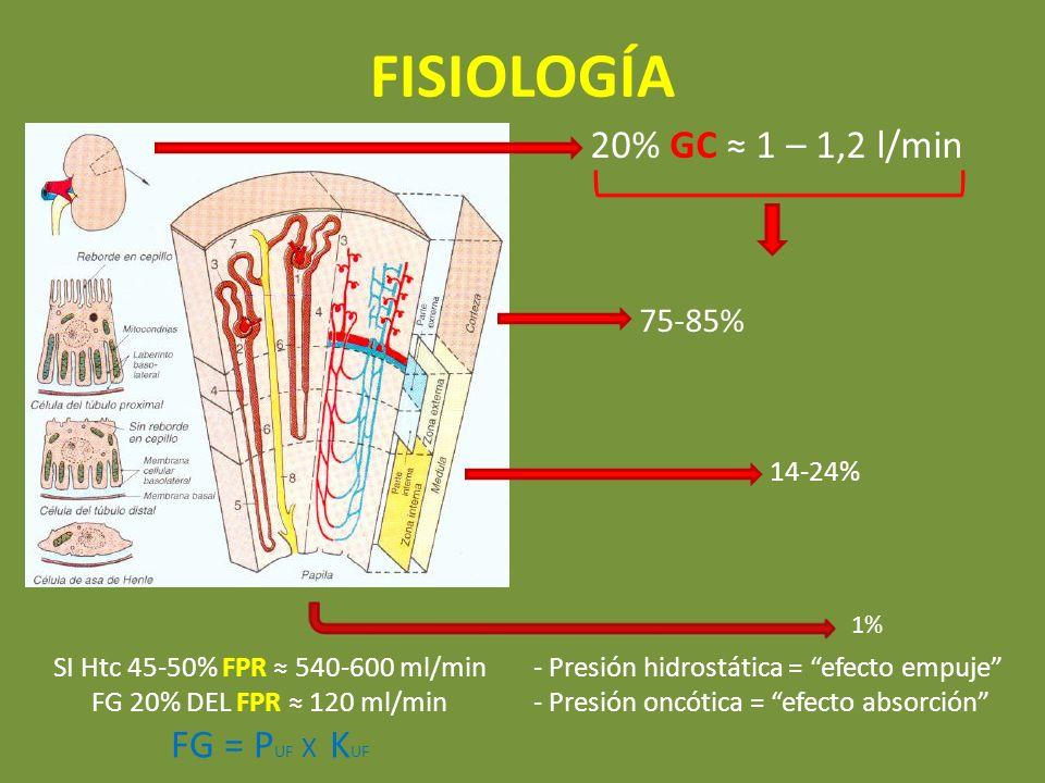 FISIOLOGÍA 20% GC 1 – 1,2 l/min 75-85% 14-24% 1% SI Htc 45-50% FPR 540-600 ml/min FG 20% DEL FPR 120 ml/min FG = P UF X K UF - Presión hidrostática =