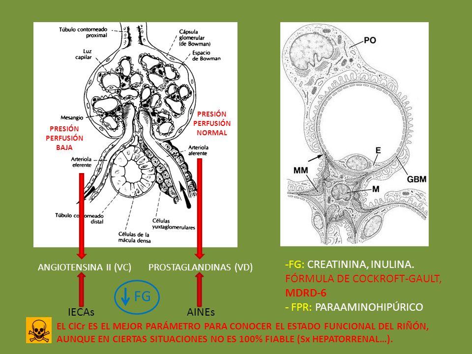 PROSTAGLANDINAS (VD)ANGIOTENSINA II (VC) AINEsIECAs FG -FG: CREATININA, INULINA. FÓRMULA DE COCKROFT-GAULT, MDRD-6 - FPR: PARAAMINOHIPÚRICO EL ClCr ES