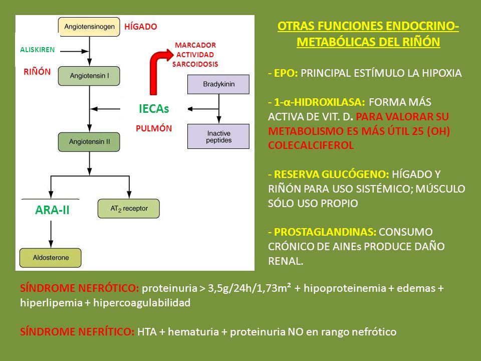 HÍGADO RIÑÓN PULMÓN MARCADOR ACTIVIDAD SARCOIDOSIS IECAs ARA-II ALISKIREN OTRAS FUNCIONES ENDOCRINO- METABÓLICAS DEL RIÑÓN - EPO: PRINCIPAL ESTÍMULO L
