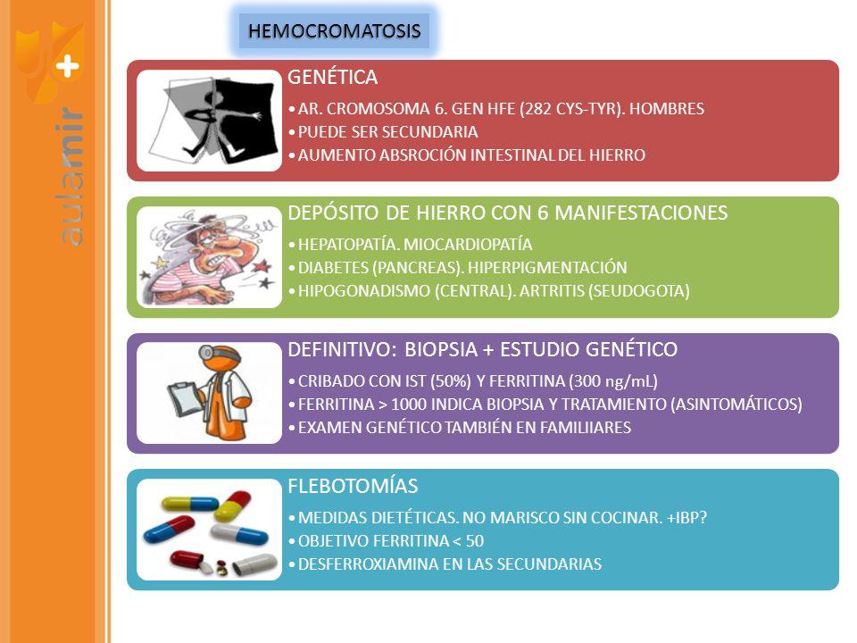 GENÉTICA AR. CROMOSOMA 6. GEN HFE (282 CYS-TYR). HOMBRES PUEDE SER SECUNDARIA AUMENTO ABSROCIÓN INTESTINAL DEL HIERRO DEPÓSITO DE HIERRO CON 6 MANIFES