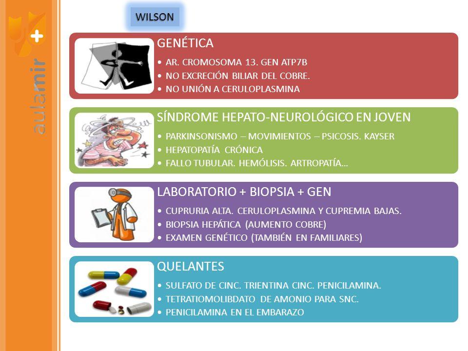 GENÉTICA AR. CROMOSOMA 13. GEN ATP7B NO EXCRECIÓN BILIAR DEL COBRE. NO UNIÓN A CERULOPLASMINA SÍNDROME HEPATO-NEUROLÓGICO EN JOVEN PARKINSONISMO – MOV