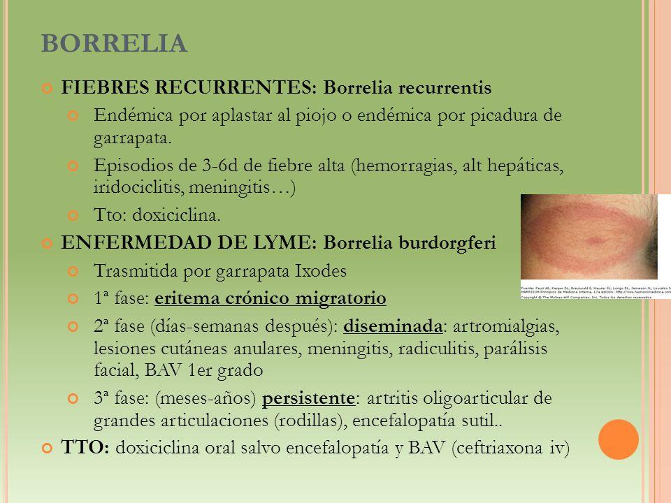 BORRELIA FIEBRES RECURRENTES: Borrelia recurrentis Endémica por aplastar al piojo o endémica por picadura de garrapata.