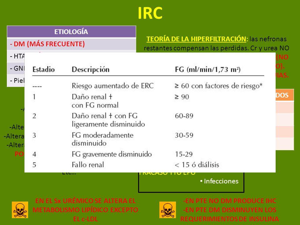 IRC ETIOLOGÍA - DM (MÁS FRECUENTE) - HTA (MÁS FRECUENTE EN ANCIANOS) - GNF - Pielonefritis TEORÍA DE LA HIPERFILTRACIÓN: las nefronas restantes compen