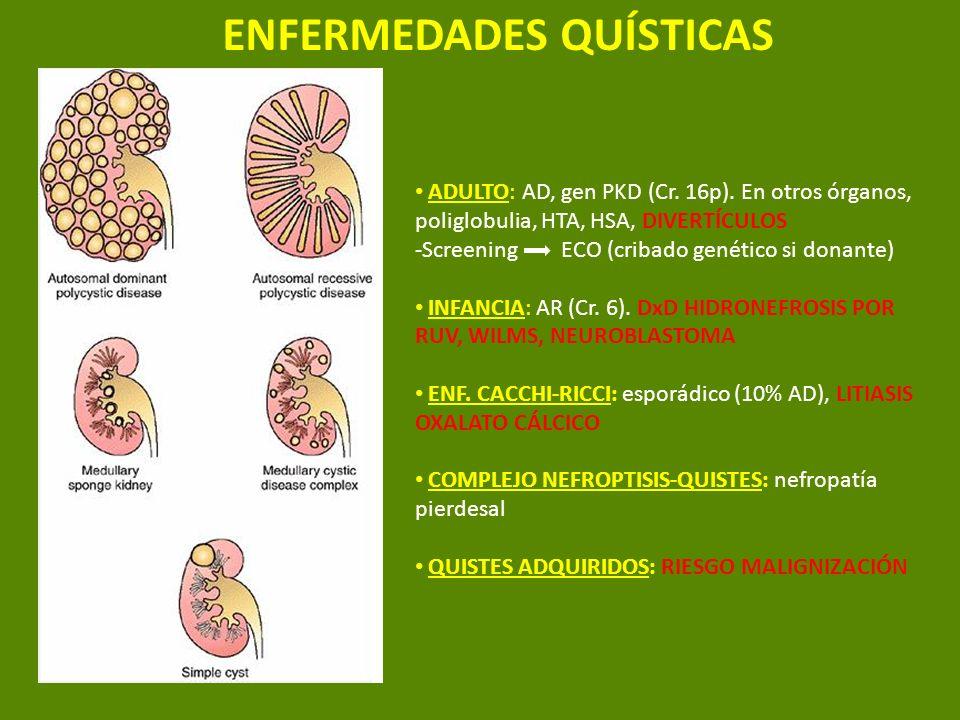 ENFERMEDADES QUÍSTICAS ADULTO: AD, gen PKD (Cr. 16p). En otros órganos, poliglobulia, HTA, HSA, DIVERTÍCULOS -Screening ECO (cribado genético si donan