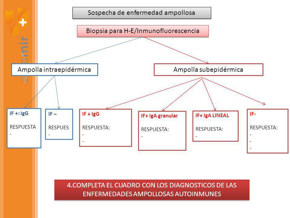 Sospecha de enfermedad ampollosa Biopsia para H-E/Inmunofluorescencia Ampolla intraepidérmicaAmpolla subepidérmica IF +: IgG RESPUESTA - IF – RESPUES - IF + IgG RESPUESTA: - IF+ IgA granular RESPUESTA: - IF+ IgA LINEAL RESPUESTA: - IF- RESPUESTA: - 4.COMPLETA EL CUADRO CON LOS DIAGNOSTICOS DE LAS ENFERMEDADES AMPOLLOSAS AUTOINMUNES
