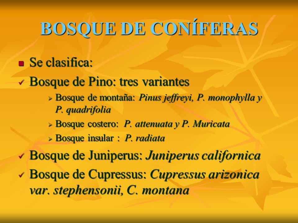 BOSQUE DE CONÍFERAS Se clasifica: Se clasifica: Bosque de Pino: tres variantes Bosque de Pino: tres variantes Bosque de montaña: Pinus jeffreyi, P.
