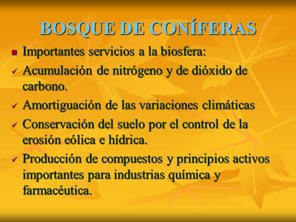 BOSQUE DE CONÍFERAS Importantes servicios a la biosfera: Acumulación de nitrógeno y de dióxido de carbono.