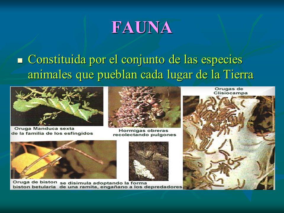 FAUNA Constituida por el conjunto de las especies animales que pueblan cada lugar de la Tierra Constituida por el conjunto de las especies animales que pueblan cada lugar de la Tierra