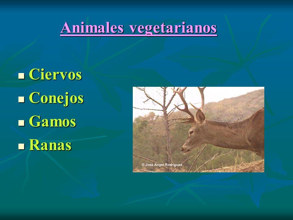 Animales vegetarianos Animales vegetarianos Ciervos Ciervos Conejos Conejos Gamos Gamos Ranas Ranas