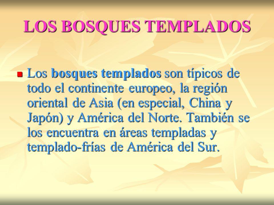 LOS BOSQUES TEMPLADOS Los bosques templados son típicos de todo el continente europeo, la región oriental de Asia (en especial, China y Japón) y América del Norte.