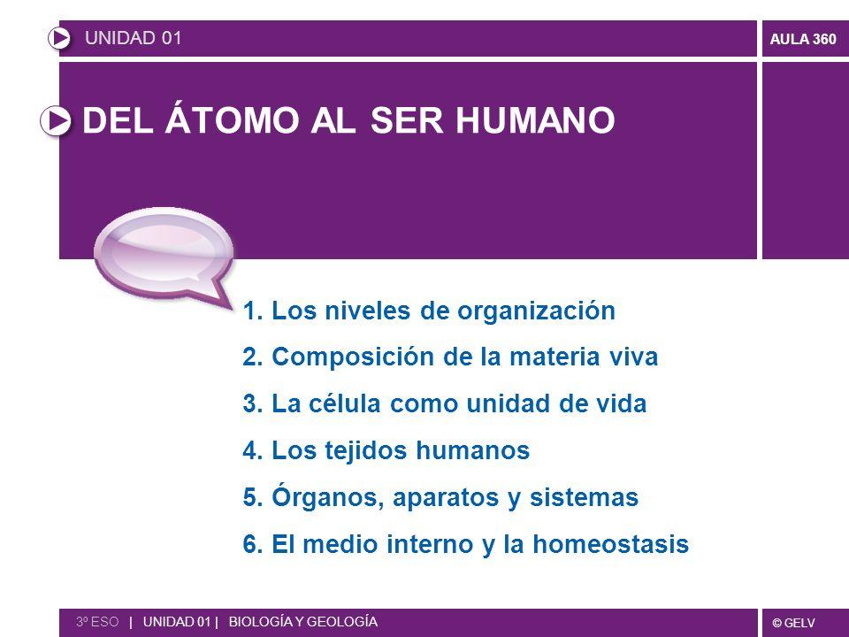 © GELV AULA 360 DEL ÁTOMO AL SER HUMANO 1. Los niveles de organización 2. Composición de la materia viva 3. La célula como unidad de vida 4. Los tejid