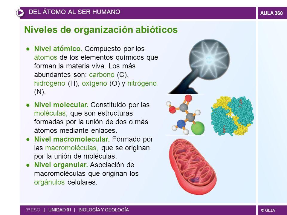 © GELV AULA 360 Niveles de organización abióticos DEL ÁTOMO AL SER HUMANO 3º ESO | UNIDAD 01 | BIOLOGÍA Y GEOLOGÍA Nivel atómico. Compuesto por los át