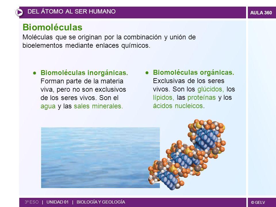 © GELV AULA 360 DEL ÁTOMO AL SER HUMANO 3º ESO | UNIDAD 01 | BIOLOGÍA Y GEOLOGÍA Biomoléculas Moléculas que se originan por la combinación y unión de