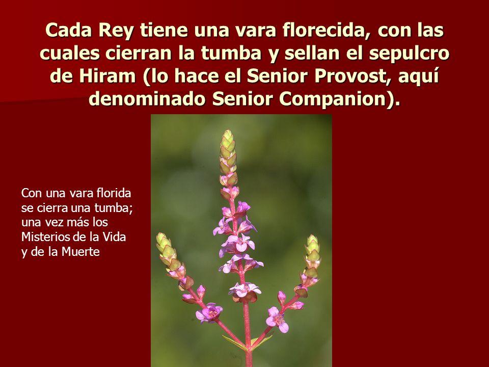 Cada Rey tiene una vara florecida, con las cuales cierran la tumba y sellan el sepulcro de Hiram (lo hace el Senior Provost, aquí denominado Senior Co