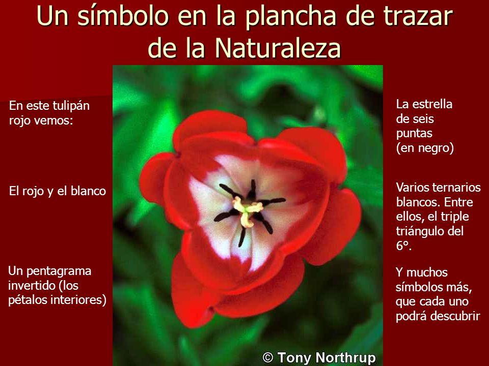 Un símbolo en la plancha de trazar de la Naturaleza En este tulipán rojo vemos: El rojo y el blanco Un pentagrama invertido (los pétalos interiores) L