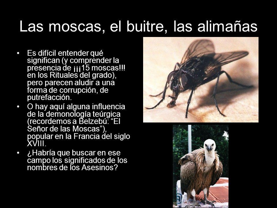 Las moscas, el buitre, las alimañas Es difícil entender qué significan (y comprender la presencia de ¡¡¡15 moscas!!! en los Rituales del grado), pero