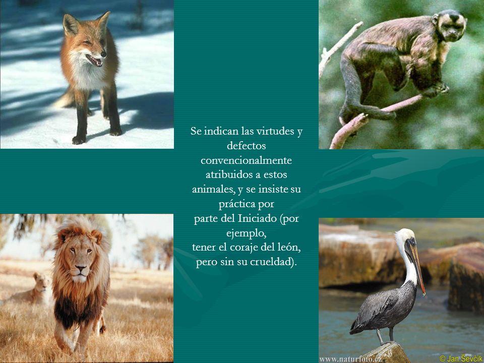 Se indican las virtudes y defectos convencionalmente atribuidos a estos animales, y se insiste su práctica por parte del Iniciado (por ejemplo, tener