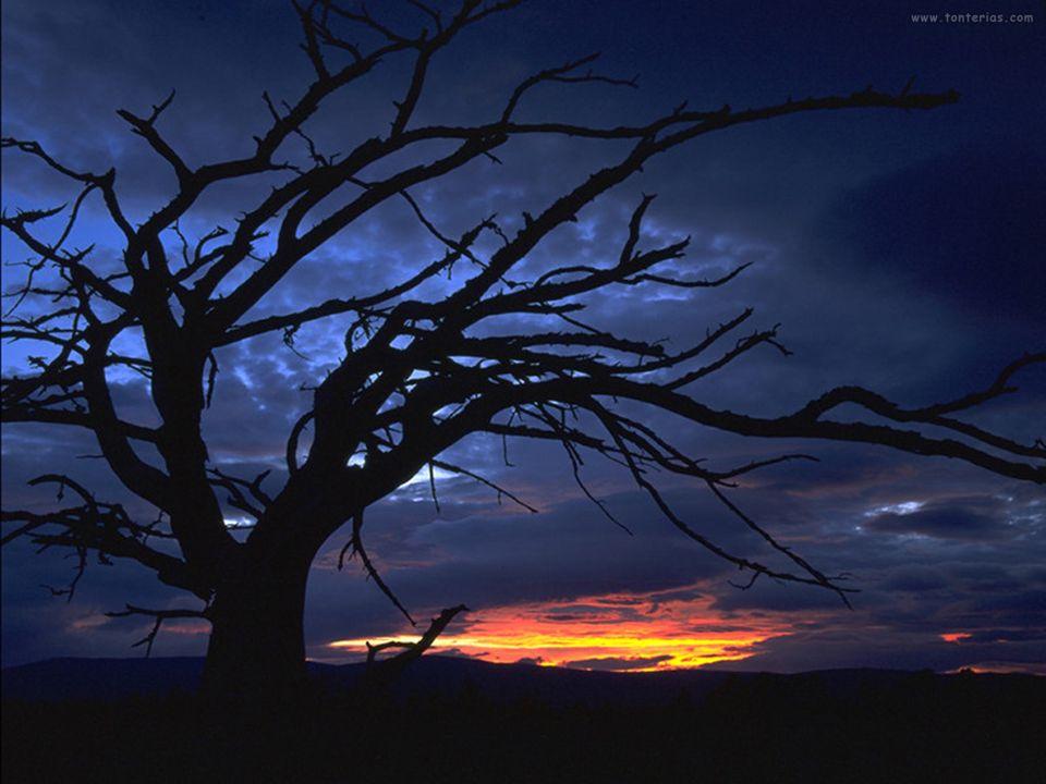 Los trabajos se abren al amanecer (al romper el alba) y se cierran al oscurecer, para que cada cual pueda adquirir nuevas fuerzas con el descanso. Seg