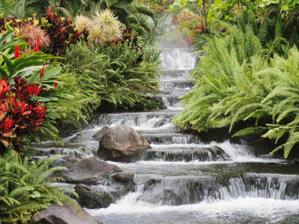 La Naturaleza La idea, en general, es la revalorización de la Naturaleza, del mundo externo, de la Creación. Idea en la que se manifiesta una paradoja
