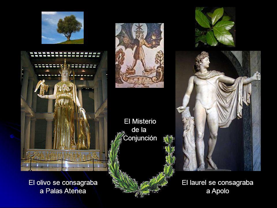 El olivo se consagraba a Palas Atenea El laurel se consagraba a Apolo El Misterio de la Conjunción