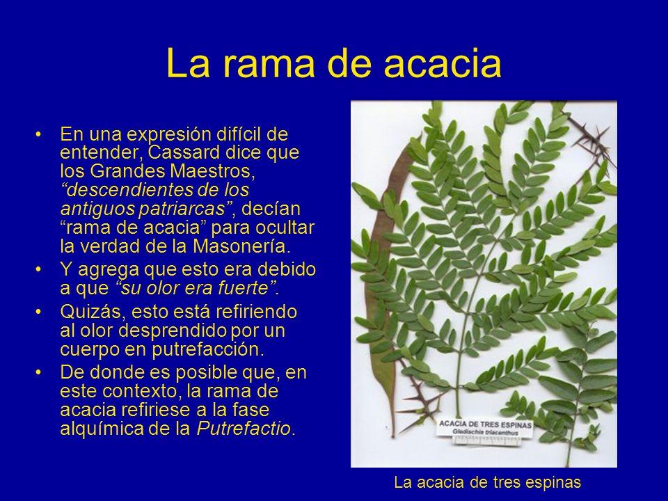 La rama de acacia En una expresión difícil de entender, Cassard dice que los Grandes Maestros, descendientes de los antiguos patriarcas, decían rama d