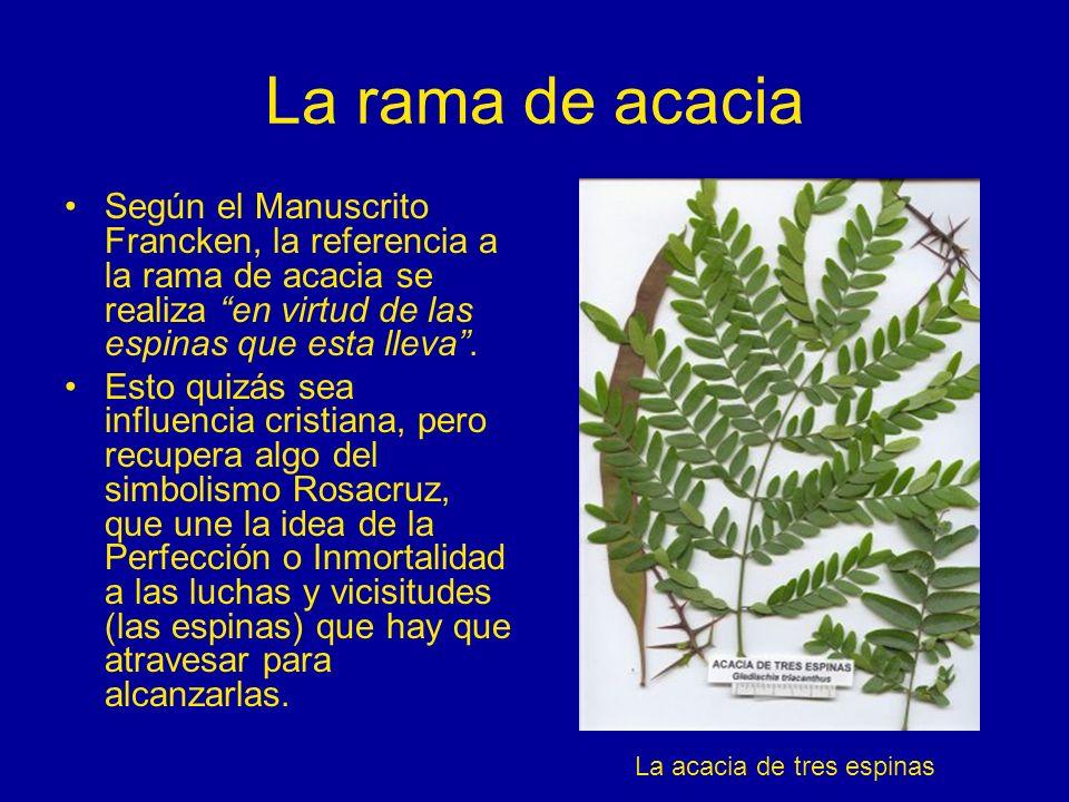 La rama de acacia Según el Manuscrito Francken, la referencia a la rama de acacia se realiza en virtud de las espinas que esta lleva. Esto quizás sea