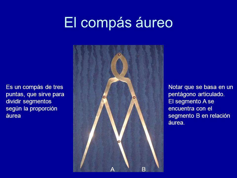 El compás áureo Es un compás de tres puntas, que sirve para dividir segmentos según la proporción áurea. Notar que se basa en un pentágono articulado.